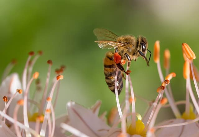 effects of insects on the environment